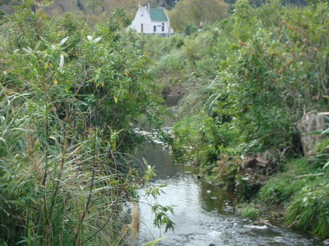 Silverstream Hull Creek - Looking West Downstream